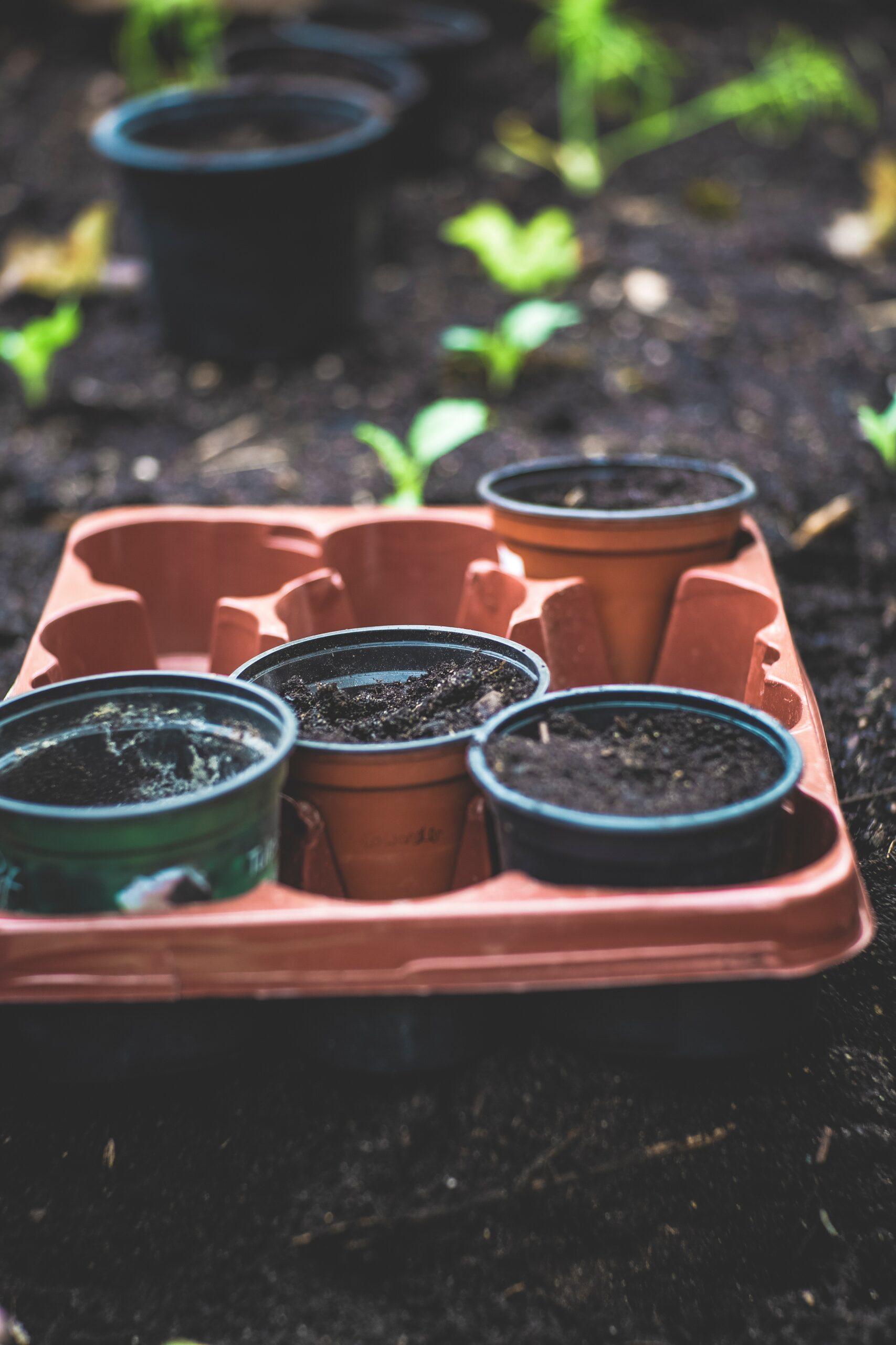 Tips To Improve Garden Soil For An Epic Tomato Harvest