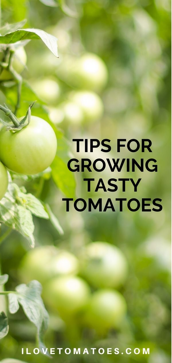 Pin Tips for Growing tomatoes