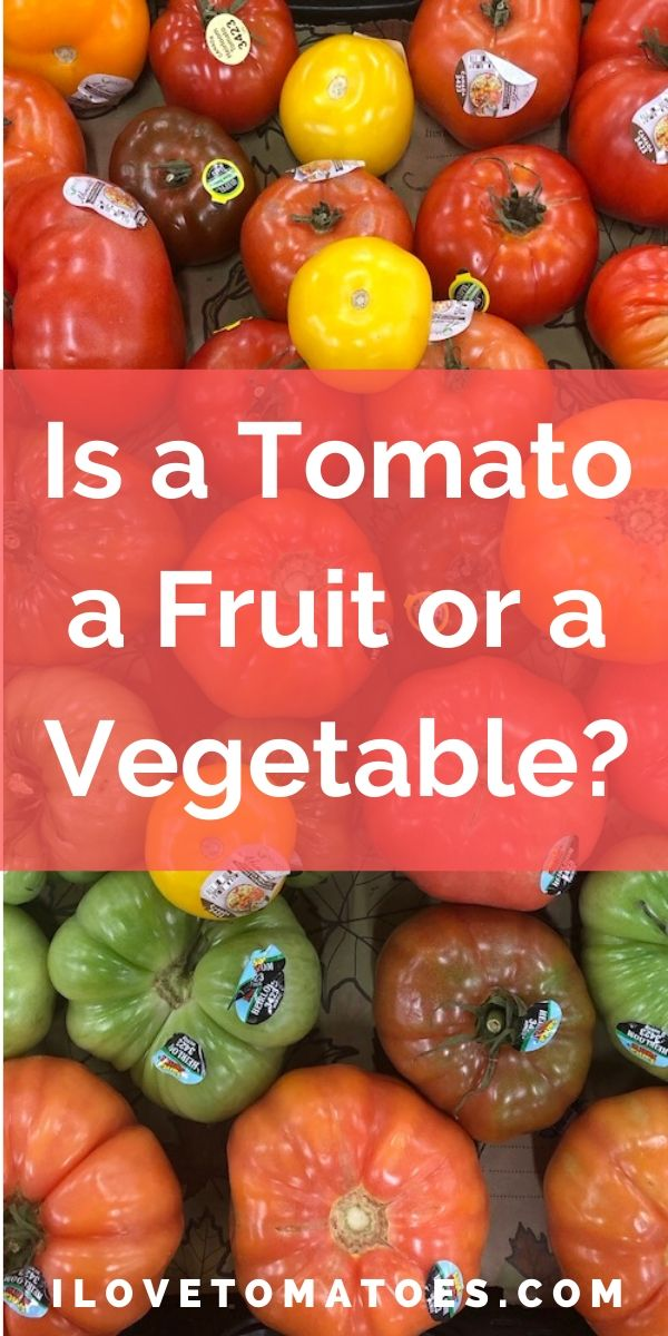 is a tomato a fruit or a vegetable